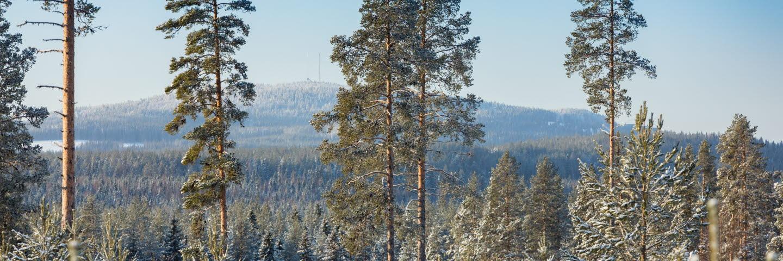 Vinter i skogen