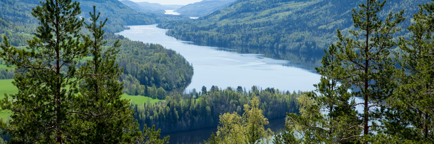 Vättaberget, Indal, Swedish nature with forest and lakes, SCA Skog, SCA Forest Products