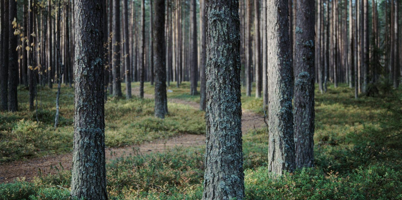Vacker skog.