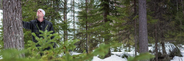 Christer Kjellberg skogsägare