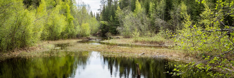 Hornsjön med Hornsjöbäcken, Sörgraninge