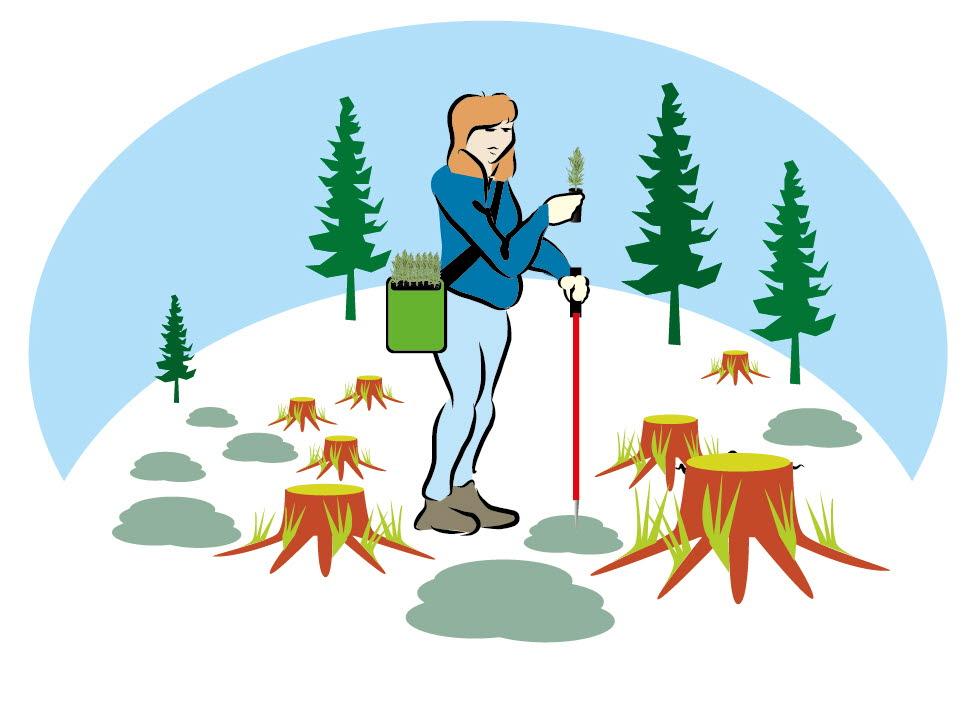Illustration plantering