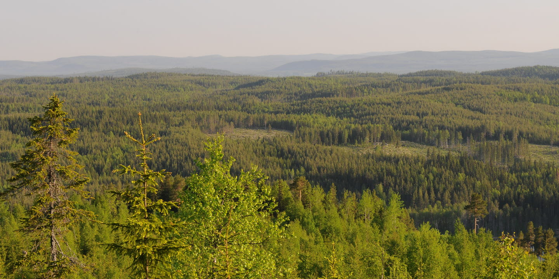 Skogslandskap med avverkade områden