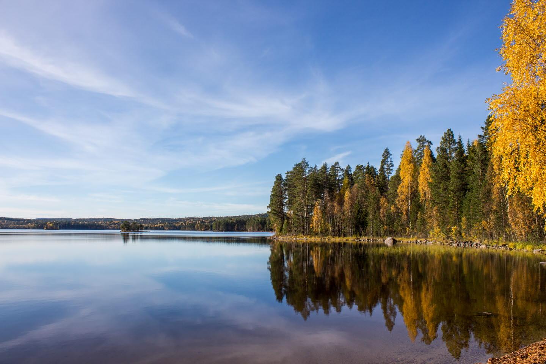 Höst i skogen med vatten