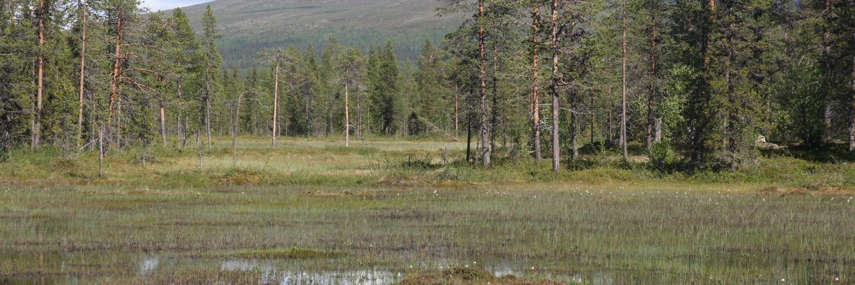 Peltovaara mångfaldspark