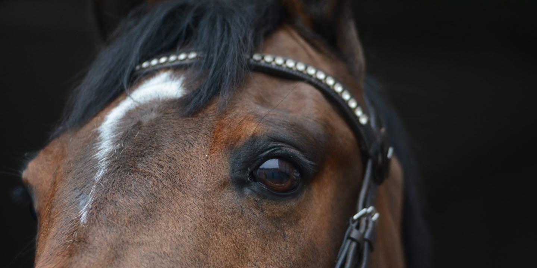 Stallpellets häst Robini