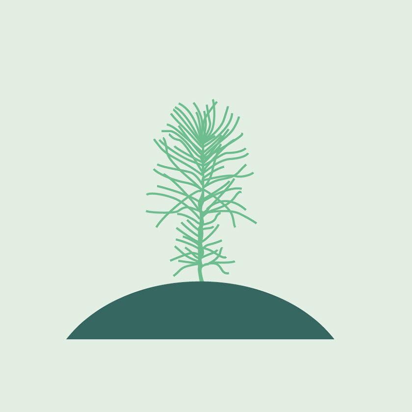 Illustration planta