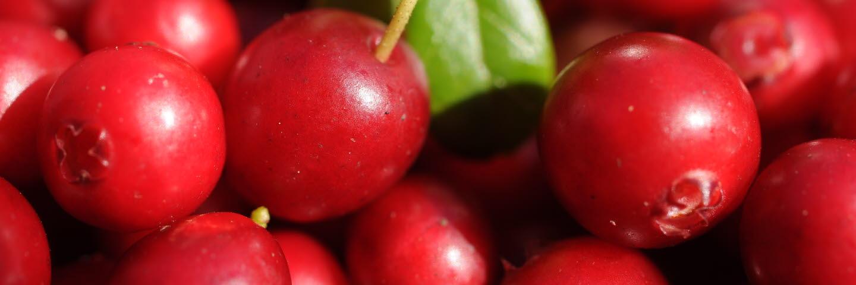 Lingon, lingonberries