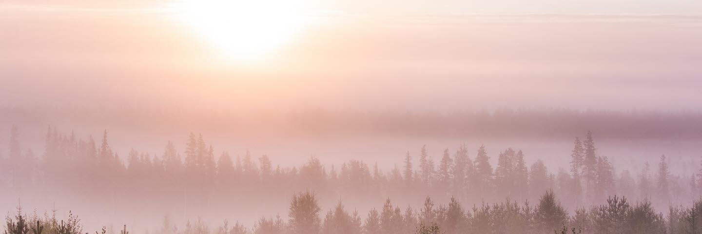 Bild avsedd att användas som startsida på PowerPointpresentationer i 16:9-format. Originalbild: Skog augusti.