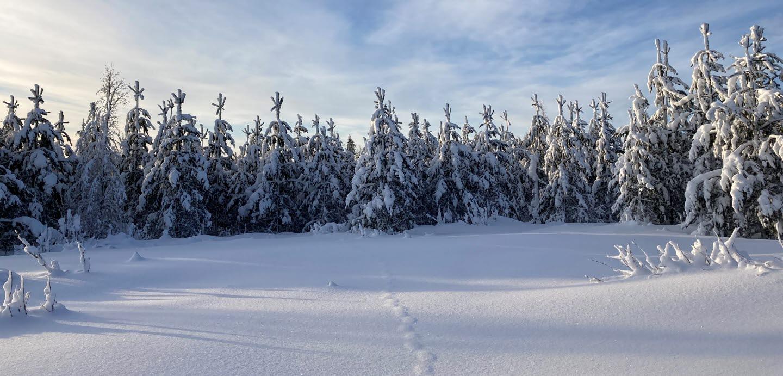 Vinter i skogen, Medelpad
