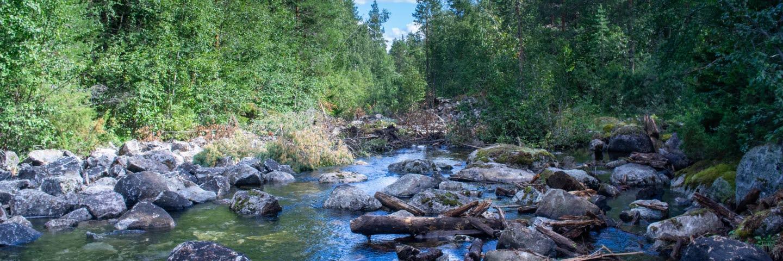 restaurering av vattendrag Agnelån i projektetr Rivers of LIFE
