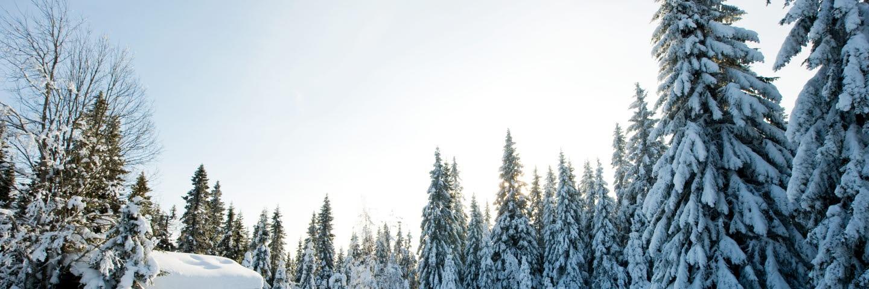 Fädbod i vinterskog