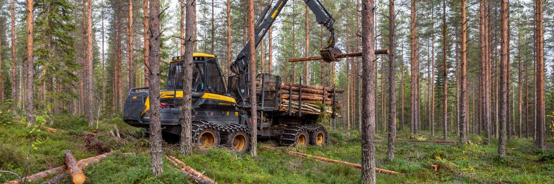 Gallring Västerbotten, skotare hämtar virke