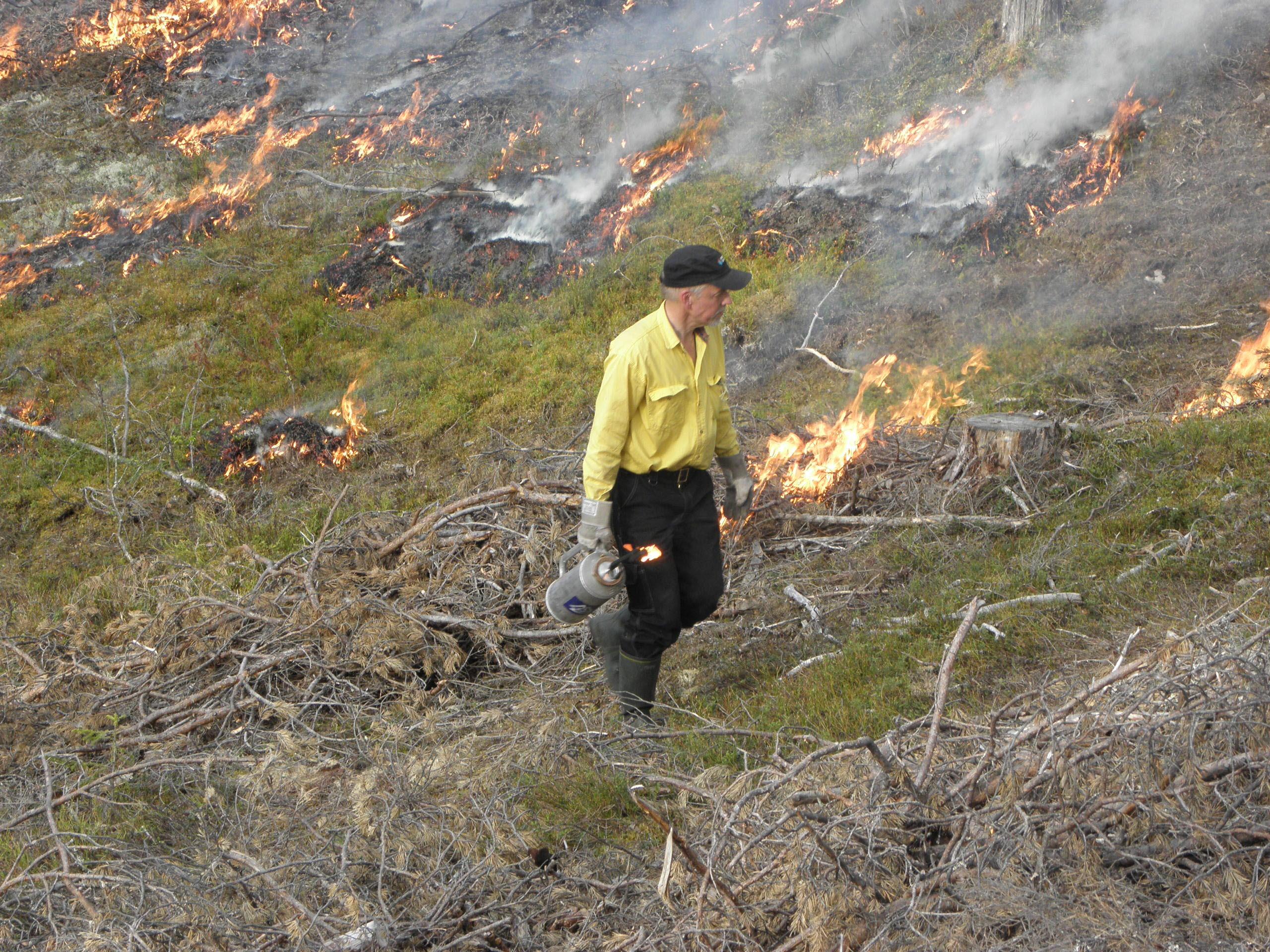 Naturvårdsbränning.
