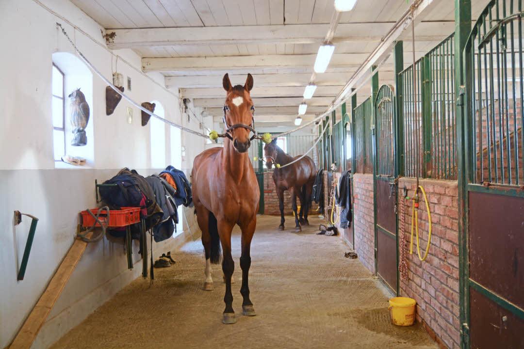 värmepellets till häst