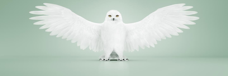 SCA Frontier symbol owl