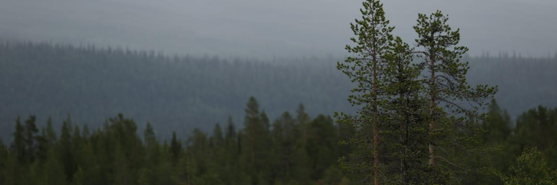 Vybild Peltovaara mångfaldspark