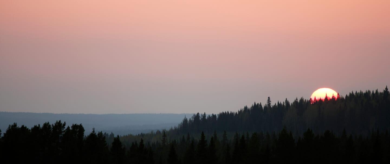 Gryning eller skymning med rosa himmel och trädtoppar