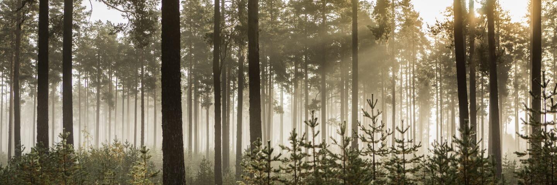 Skogmiljö.
