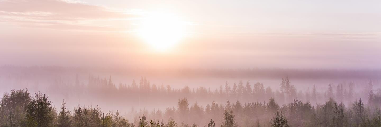 Skog med solsken i augusti. Forest in Augusti. Vi har rättigheter tom 20191231