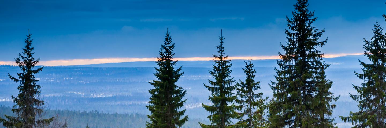 Skog på vintern, forest during winter