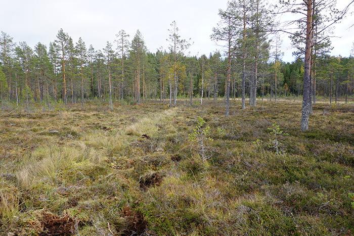Igenlagt dike Bjursjömyren 700x467 för webb