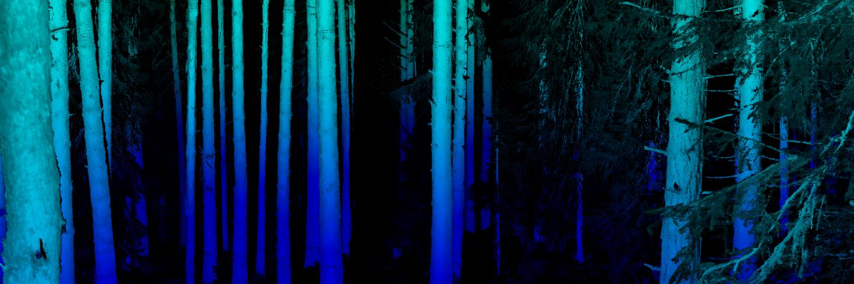 Högupplöst biild av markskannad skog, Laserskanning laxsjön Mistra Digital Forest
