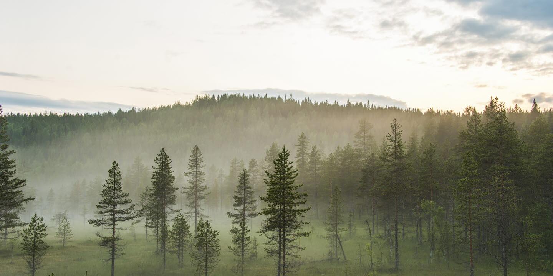 Bild till webben