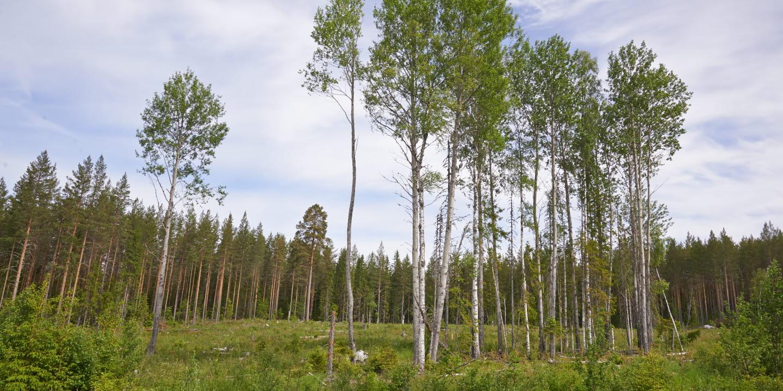 Reportage om skogsvård i Din Skog 2015.