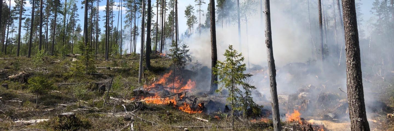 Naturvårdsbränning i Sörgraninge mångfaldspark 1 juni 2021