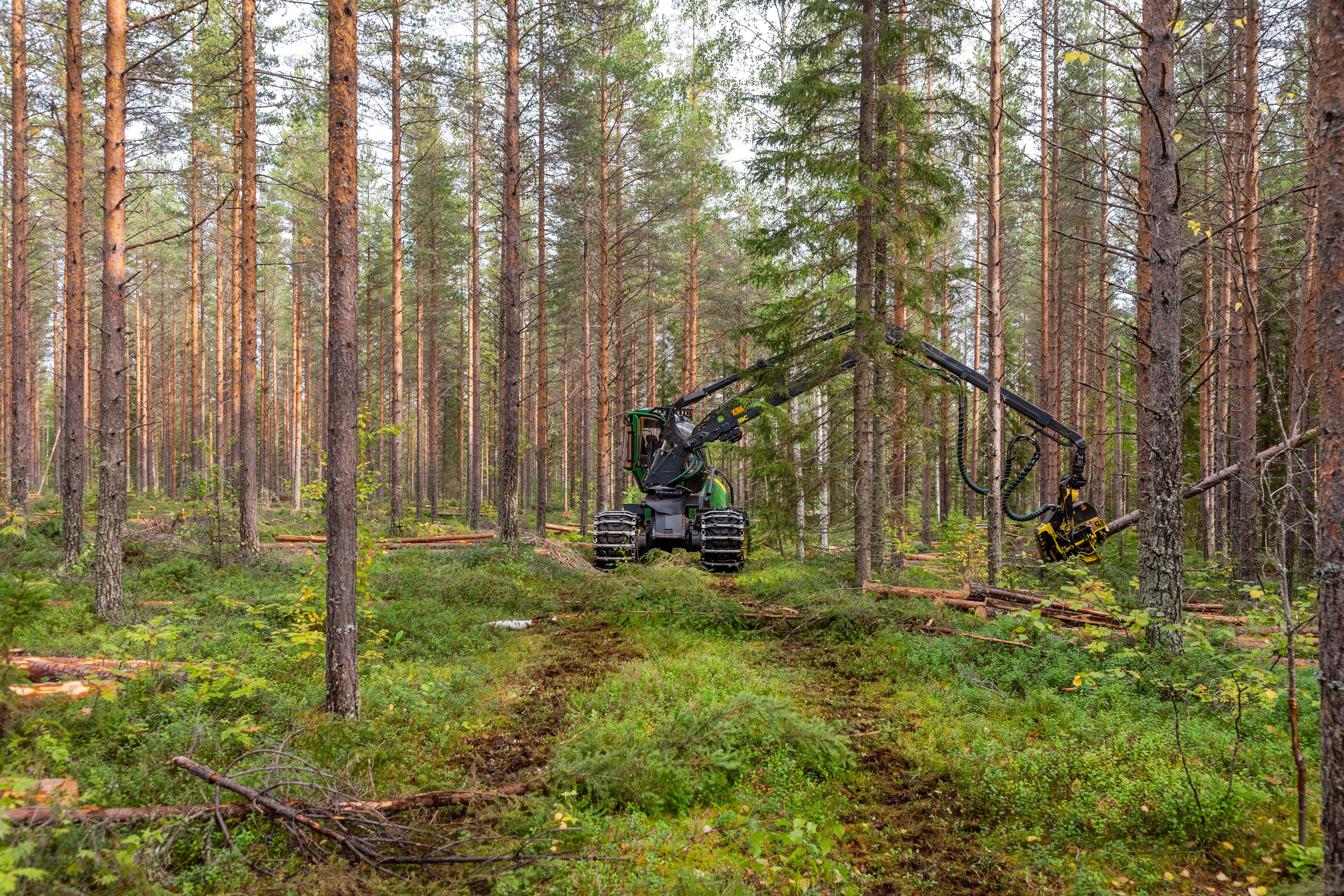 Skördare som gallrar i Västerbotten