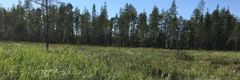 Rödmyran Paulund i Västerbotten, restaurerad myr 2014, foton från 2019