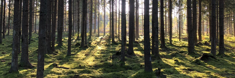 Skogsresa Estland och Lettland