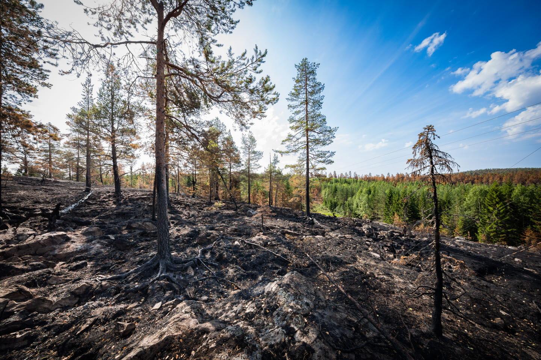 Eftersläckning av skogsbrand i Möckelsjöberget, Ångermanland