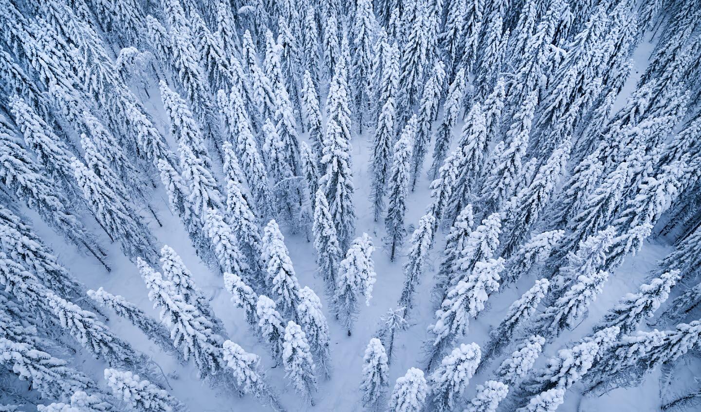 SCA Pure_vinterskog