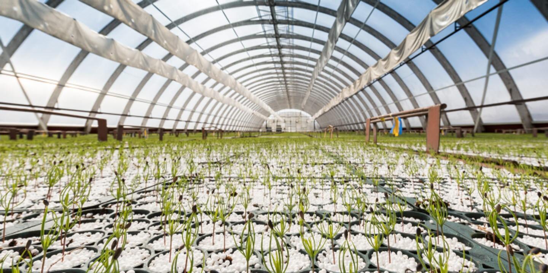 Växthus Wifstmons plantskola, Wifstamon plant nursery