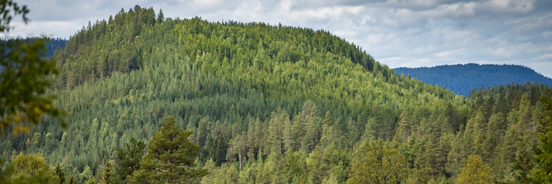 Skogsvy mot berg, forest on a mountain