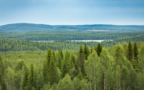 Skog 7898.jpeg