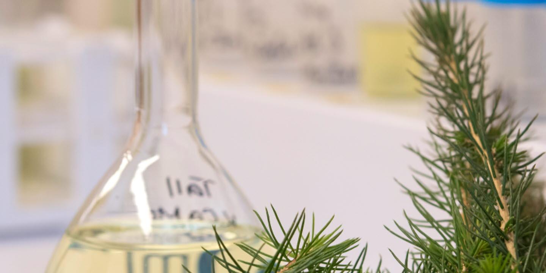 Kvalitetskontroll av plantor på NorrPlant , Quality control of seedlings att NorrPlant