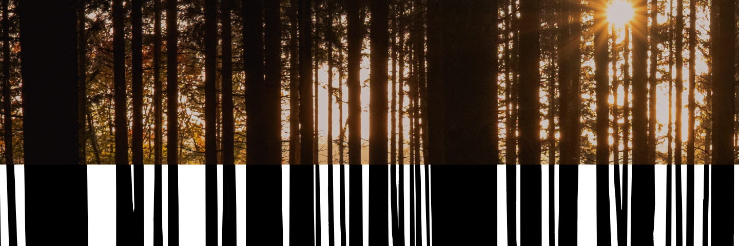 Forest shown like a barcode